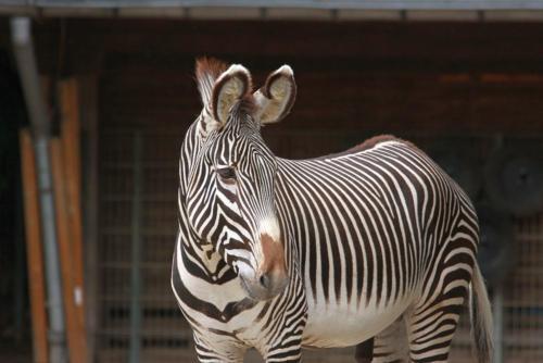 2010 Zoo Köln
